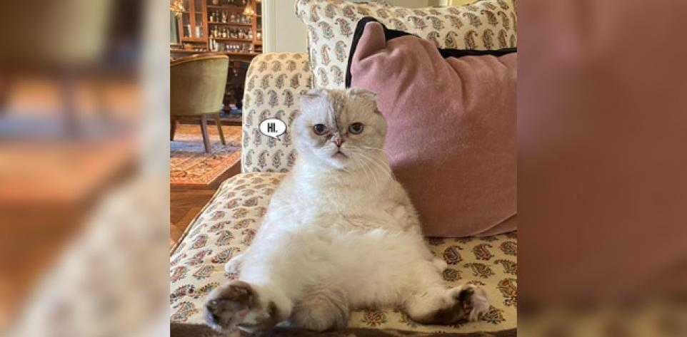 10 Twitter Moments: Taylor Swift's Kitty Is A Quarantine Vibe   Best of Twitter