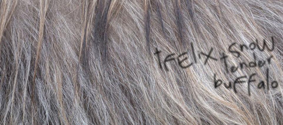 Felix Snow - Tender Buffalo